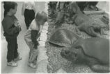 Children and tortise
