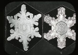 Snow Crystals - Oblong Hexagonal Forms