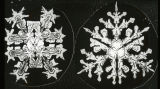 Odd forms of Snow Crystals, one dividing into four, eight and twelve