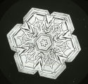 Medallion Form of Snow Crystal Showing Development from Star to Hexagonal Form
