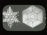 Snow Crystals - Tabular Types