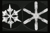 Long Rayed Star Snow Crystal