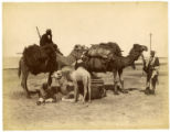 Groupe des chameause [group of camels]