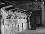 Buyers inspecting quality of fruit at fruit auction, 27th & Ashland, Chicago