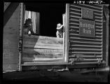 Carpenters building up sides of boxcar to accommodate wheat-Vernon, Texas