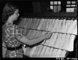 Woman clerk filing slips that show location of freight cars, Burlington railroad office, Chicago,...