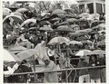 Homecoming, Crowd under umbrellas, 1993