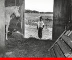 Boy looking at horse in barn