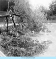 Storm damaged tree and swimming pool