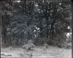 Forests - Scene, tree grouping, Schiller woods
