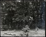 Forests - Scene, Picnic grove, Deer Grove