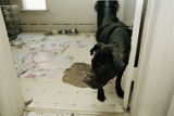 Animal Crimes Division/ dog fighting, image 22