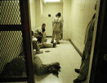 Inmates and suspects, Cook County Jail, image 005