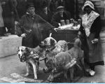 [The Belgian dog cart troupe at A Century of Progress.]
