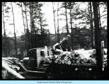 [Unidentified loggers loading timber on a flatbed truck.