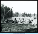 [Log piles stacked together at Hawthorne Lumber Company.]