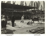 [Dog and pony show at the Century of Progress International Exposition, 1933-1934.]