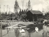 [The Old Mill and the International Friendship Garden at the Century of Progress Horticultural Exhibit.]