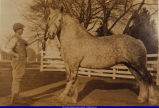 Unidentified Man and Horse, early 1900s