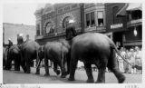 Elephants in Circus Parade on Macomb Square 1934