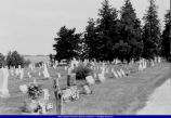 Glade or Old North Cemetery Blandinsville 2002