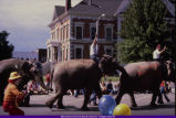 002555.JPG Macomb Square Parade Elephants